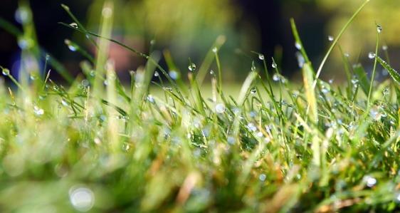 grass-498628_640