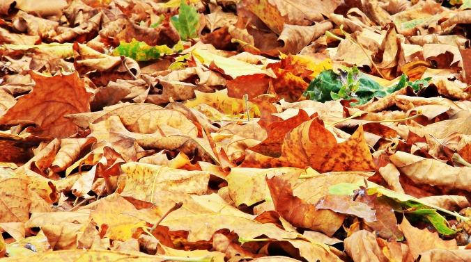 autumn-1638465_1920