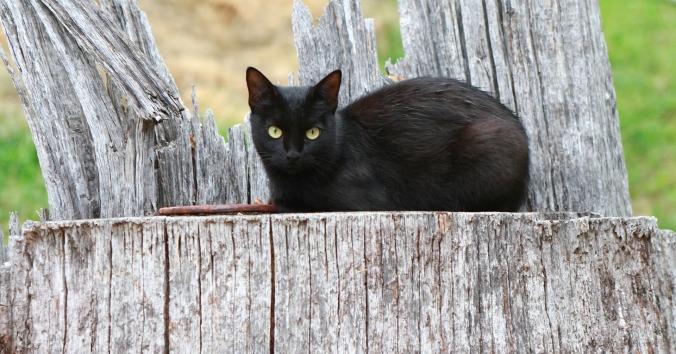 cat-707463_1920